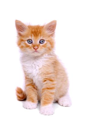 kattenpension kattenhotel almere